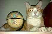 You Avatar