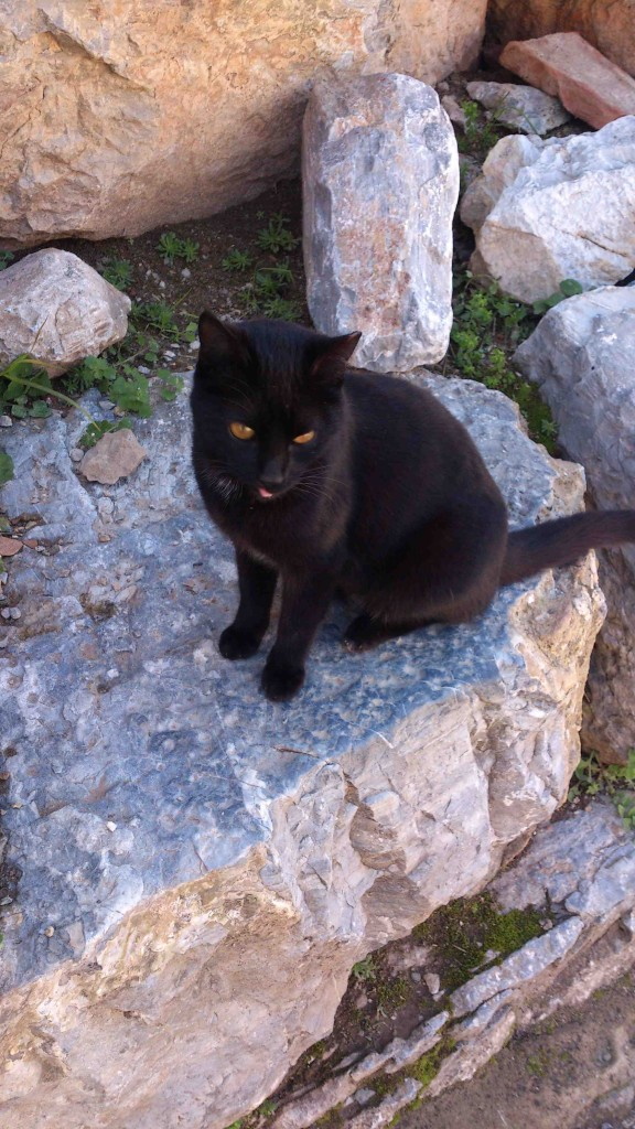 4. cat1