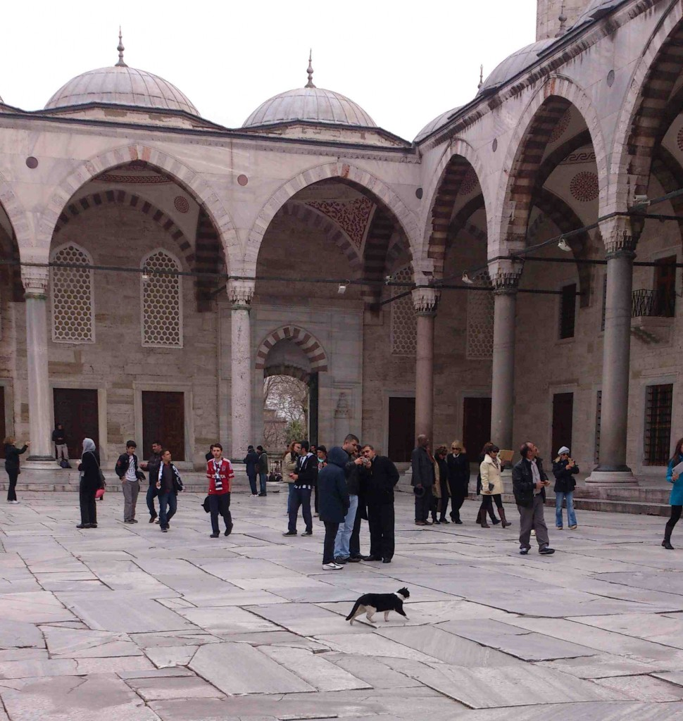 5. blue mosque cat