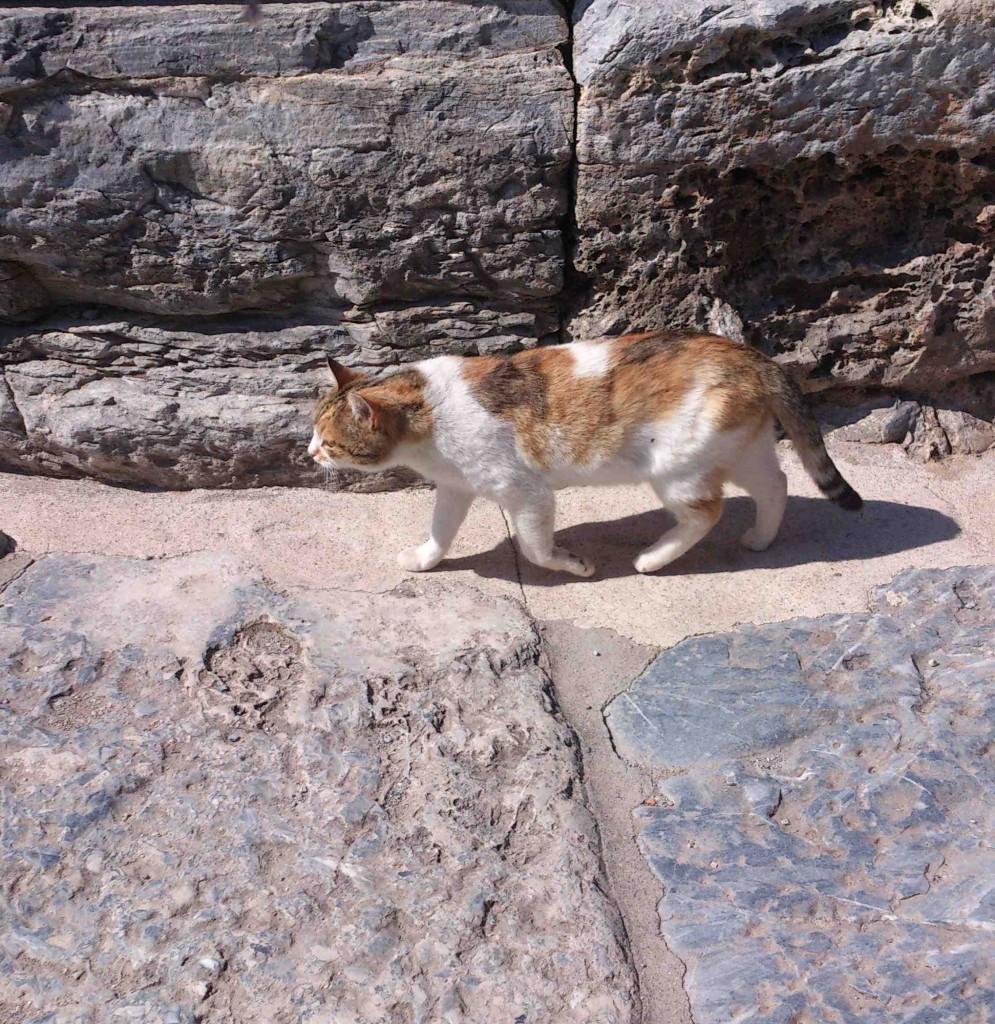 9. cat4