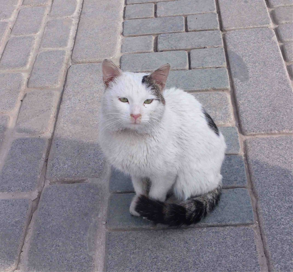 hippodrome cat