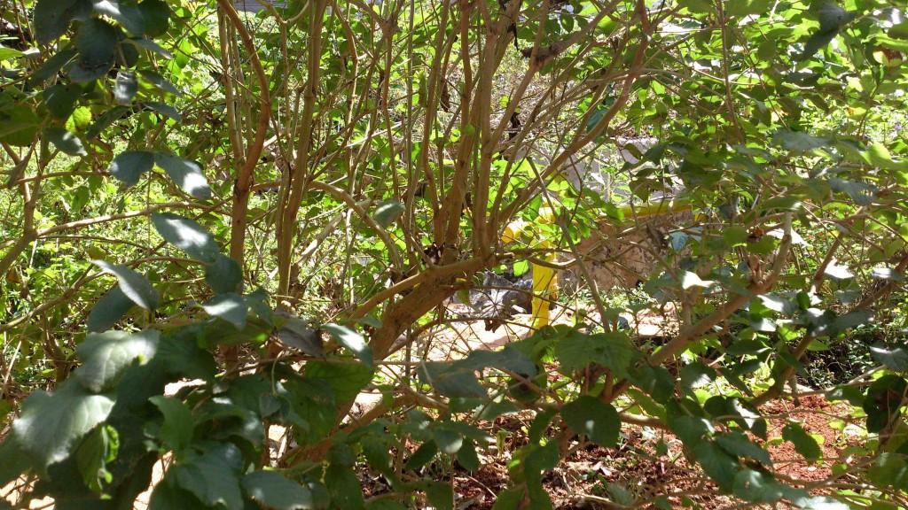 7. butterfly garden