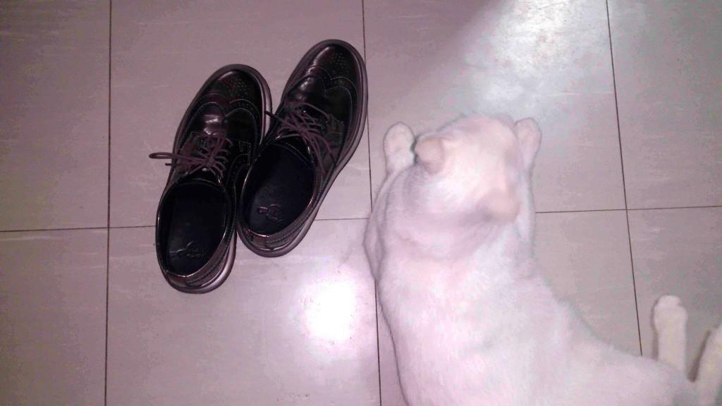 docs w cat