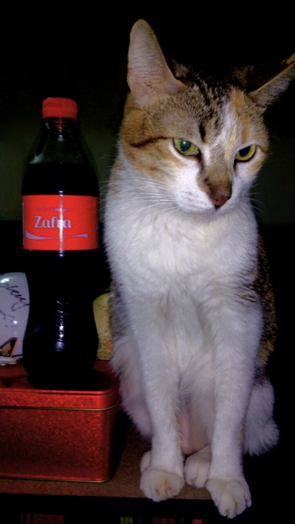saffy with coke