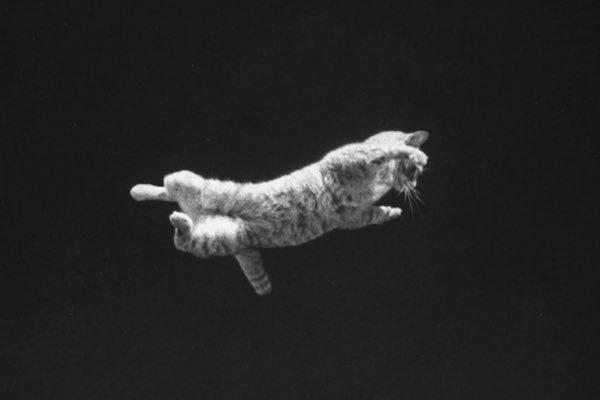 A cat being dropped upside down to demon