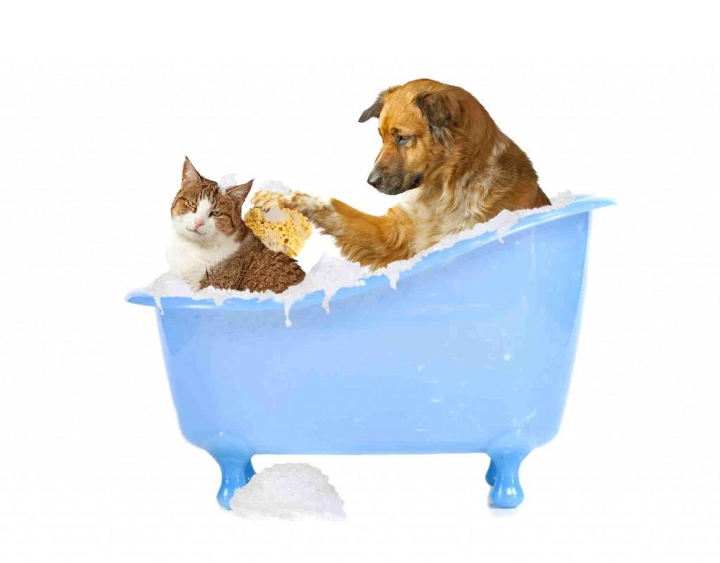 cat_dog_bath