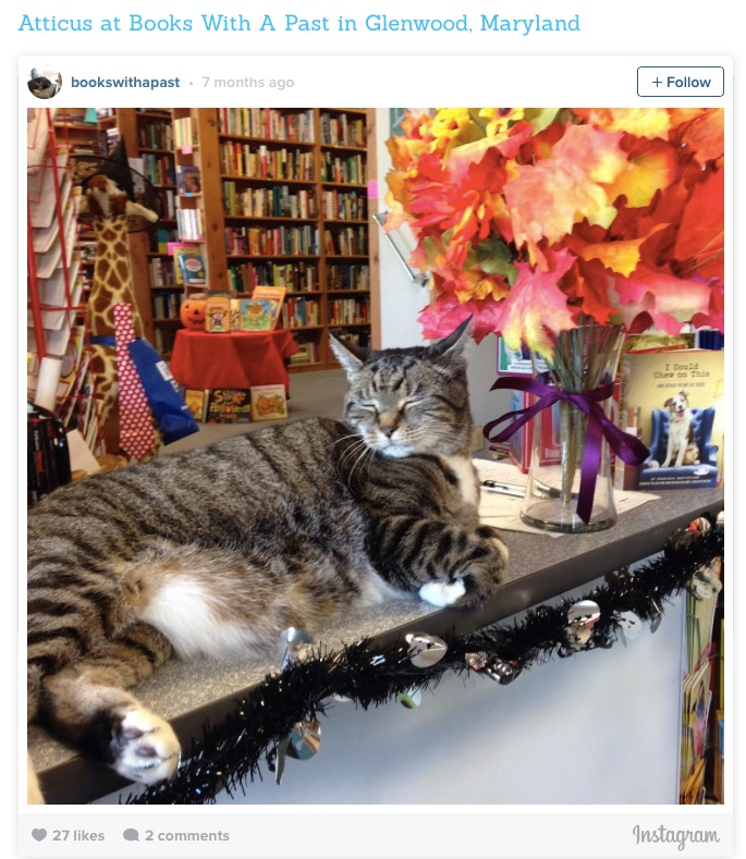 bookstore cat