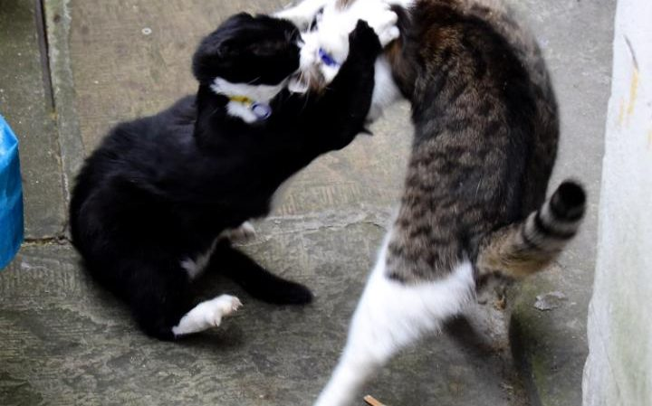 cat-large_transqerzik48kn1vnvjmsaxo1ii_hztl4h8efxg2wgb1gho