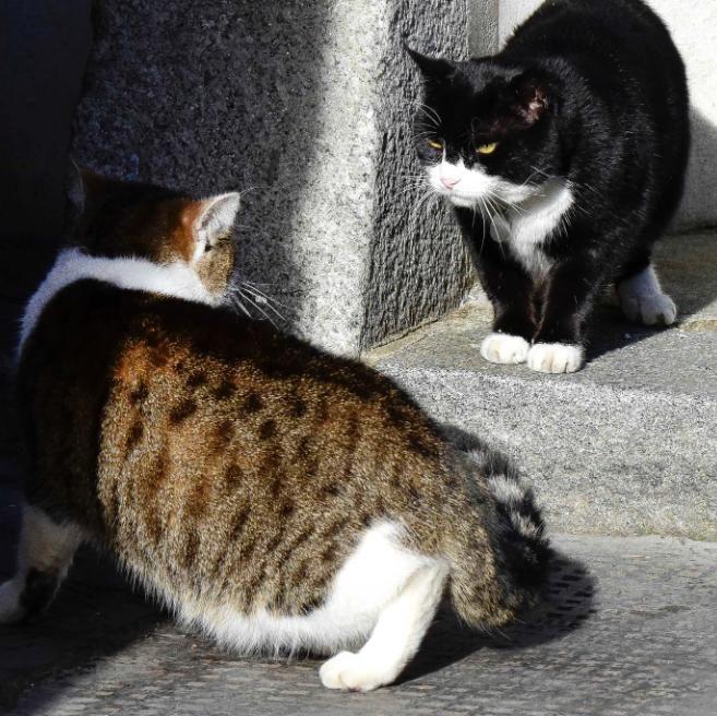 cats-large_transg378enbifeamodg7tofszlarmilmusvgifwdoqw4i4m